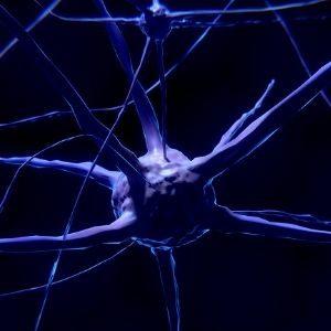 las conexiones neuronales son imprescindibles en la transmisión de la información de forma positiva