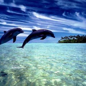 Muchos beneficios tienen los tratamientos realizados con agua de mar