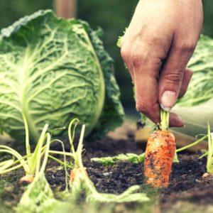 alimentación sostenible consciente y energética