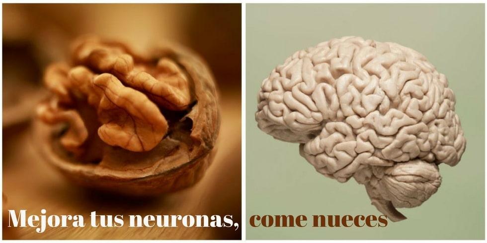Las nueces mejoran las neuronas
