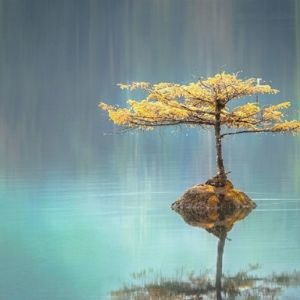 Terapia filosófica o counseling