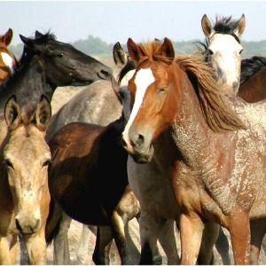 constelaciones y caballos
