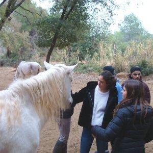 constelar con caballos