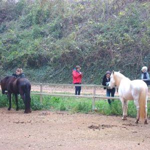 constelaciones familiares con caballos