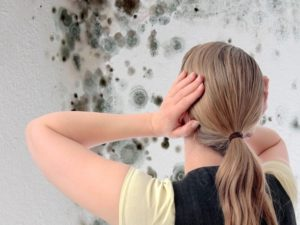bioconstruccion y problemas de humedad