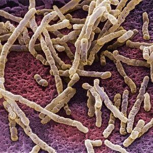 como erradicar la candiasis intestinal