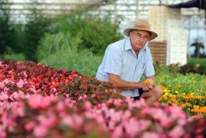 Josep Pàmies Horticultor