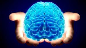 Para qué sirve el cerebro