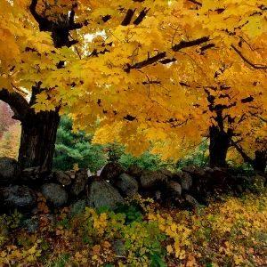 otoño la estación donde nació yoentí