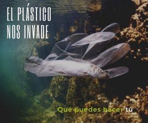 invasión plástica y opciones para evitarla