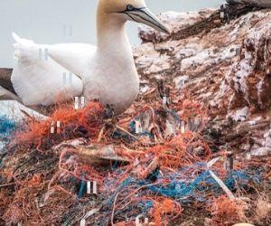los animales viven entre el plástico