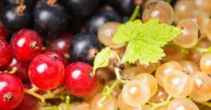 arándanos propiedades saludables artículo de Sanamente.net
