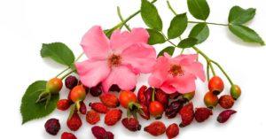 piel aceite rosa mosqueta artículo de Sanamente.net