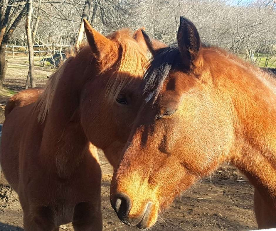 Método integrativo terapéutico con caballos