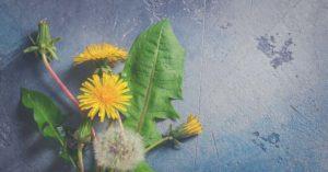 Portada Diente de león depurativo artículo de Sanamente.net