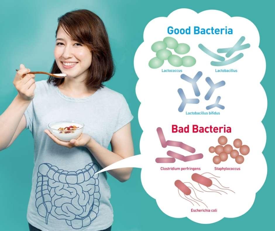 cómo tomar los probióticos y prebióticos