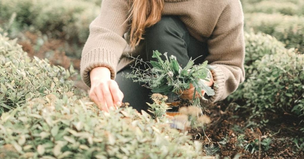 reconectar con la esencia del ser gracias a la alimentación