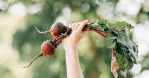 reconectar esencia ser alimentación, un artículo de Sanamente.net